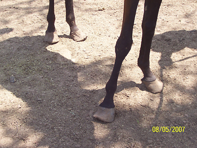 Haley's hooves when seized