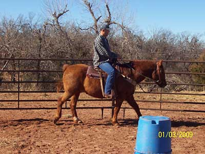 Work under saddle